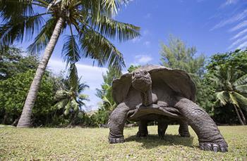 Aldabra Mercan Adası