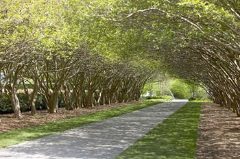 Arboretum'da Sonbahar