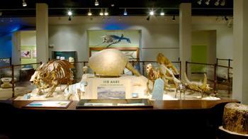 Austin Müze Günü