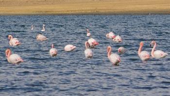 Erçek Gölü Flamingolar Göç Festivali