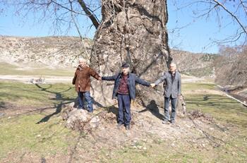 Gökçeli Şehit Ağacı