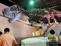 Houston Doğa Bilimleri Müzesi