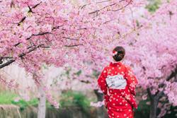 Japon Kiraz Çiçeği Festivali