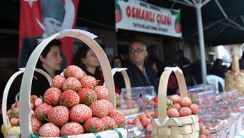 Karadeniz Ereğli Osmanlı Çileği Kültür Festivali