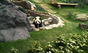 Macau Dev Panda Köşkü