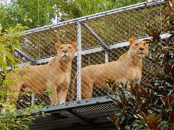 Philadelphia Hayvanat Bahçesi