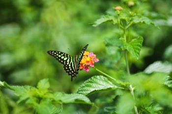 Sammilan Shetty's Butterfly