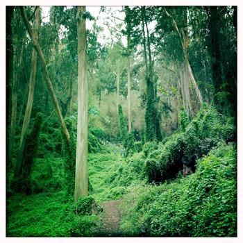 Sutro Dağı Ormanı