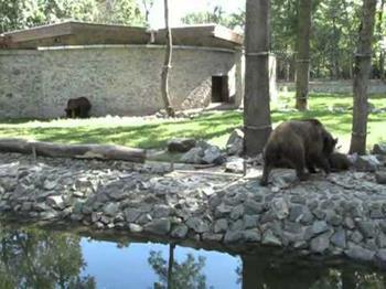 Timisoara Zoo