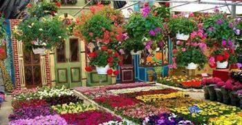 Uluslararası Bayındır Çiçek Festivali