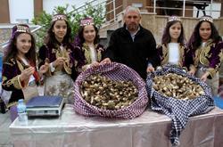 Yeşilüzümlü Kuzugöbeği Mantar Festivali
